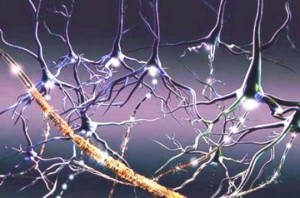 adaptação neural