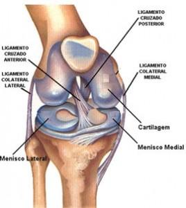 Ligamento colateral fibular do joelho.