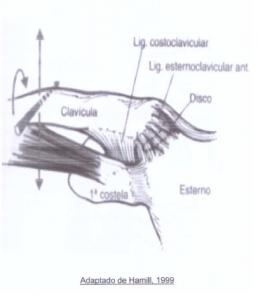 esternoclavicular