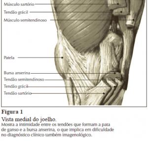 figura 1 pata de ganso